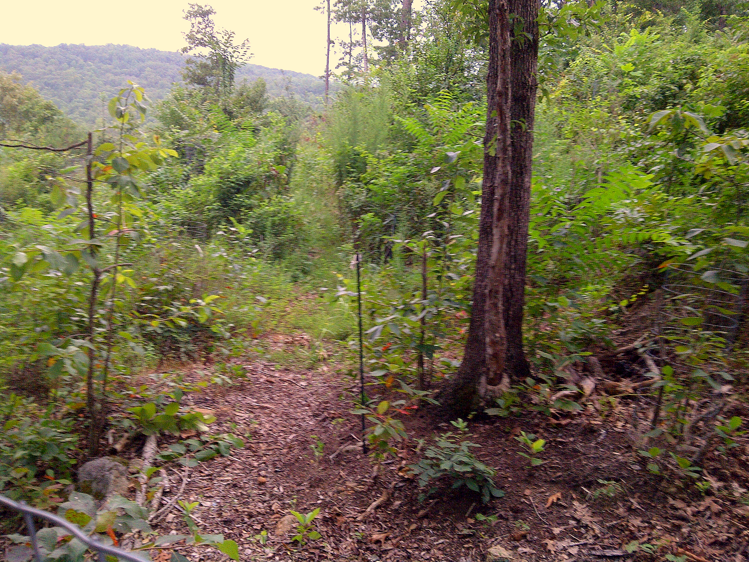 camouflaged food forest prepper broadcasting network
