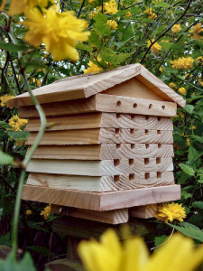 Beekeeping - Solitary Bee Hive
