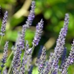 Herbal Steams for Cold and Flu Season