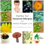 Herbs for Seasonal Allergies