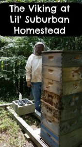 Beekeeping bbseviking