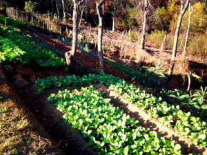 Growing gardening-vegetables