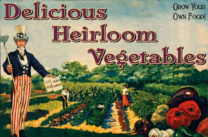 10-6-16-heirloom-seeds-for-preppers
