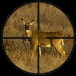 scopes deer-in-a-rifle-scope