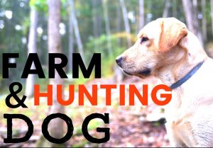 Raising Dogs for Hunting and Farm life