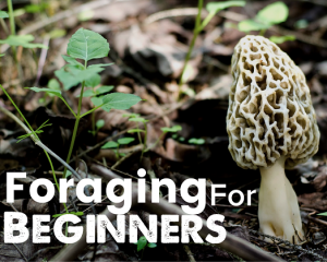 How to start foraging … Without killing Your family!