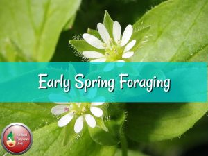 Early Spring Foraging