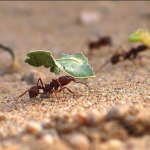The Ant and thegrasshopper…work activities