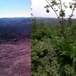 Preppers Path2-10before and after crop