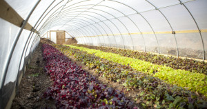 Growing Power good-hoophouse-production-720x380