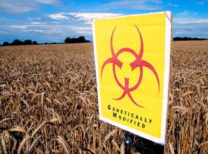 Assault gm-foods