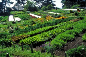 3-7permaculture1