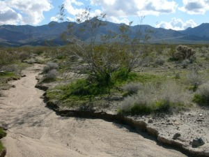 10-11-14 Dry_river_bed_in_California