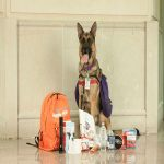 Pets in a Post-SHTF World