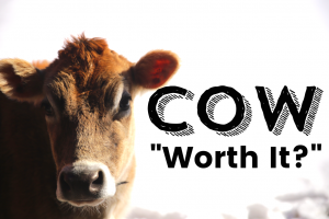 "Is a Family Cow ""Worth It""?"