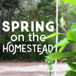 Spring on the Homestead – A Busy Time Of Year!