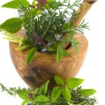 Discovering or Rediscovering Herbs
