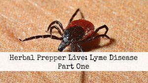 Lyme Disease and plant medicine relief