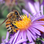 To Bee or Not to Bee, death for life